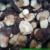 Frozen boletus pinecola class 1 size 6-8 cm