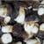 Frozen boletus pinecola class 1 size 4-6 cm